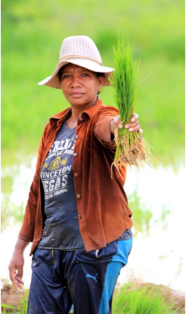 Farmer in her paddy field