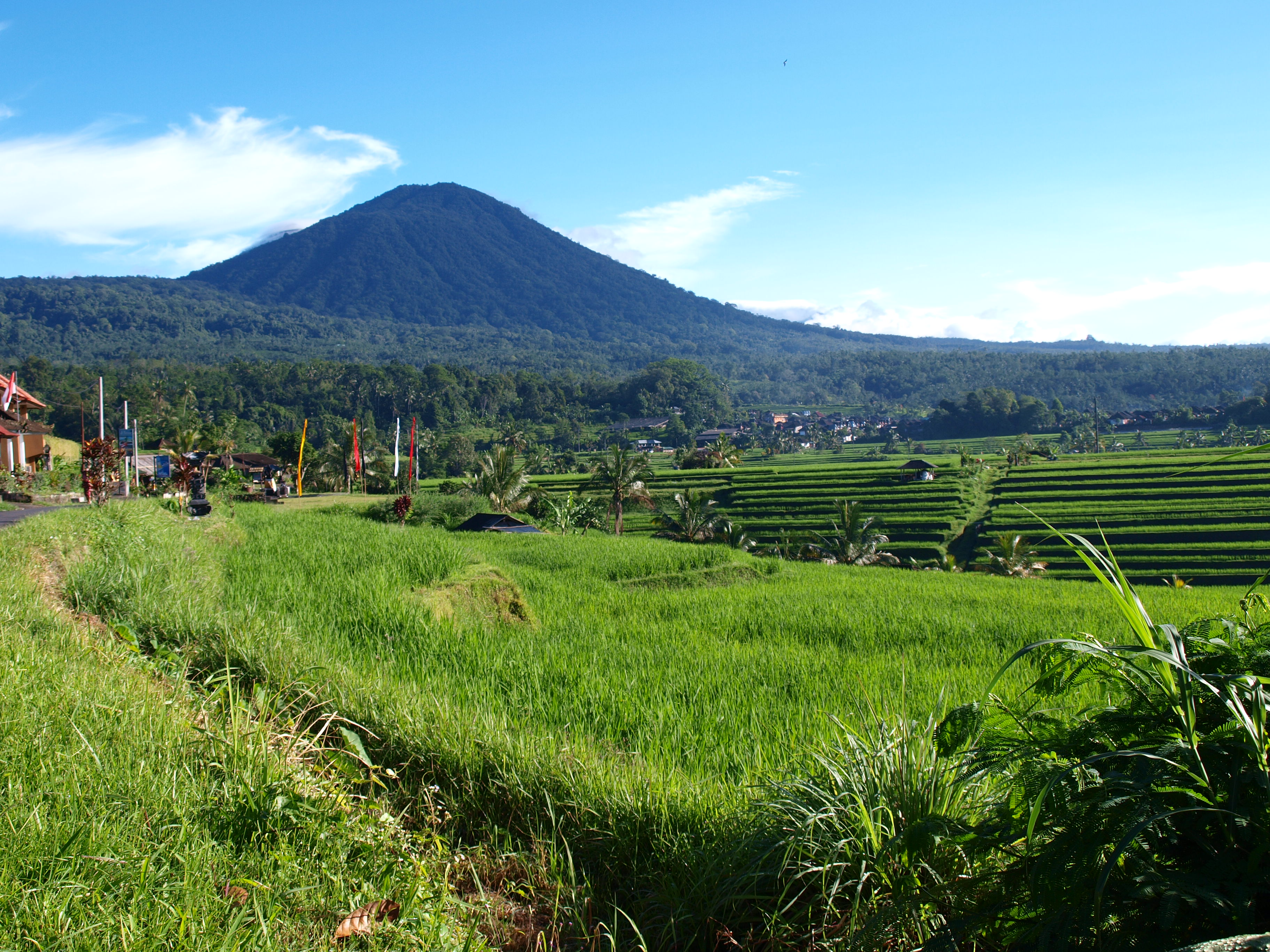 53982736c6f1cbali-scenes-ricefields-02-24-14-147 0 - climate adaptation.
