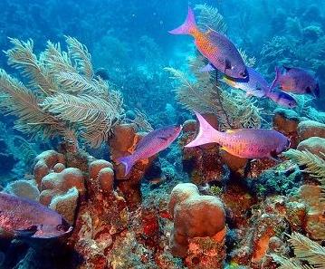 belize fish 2 - climate adaptation.