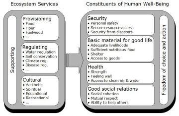 millennium ecosystem assessment 2005 pdf