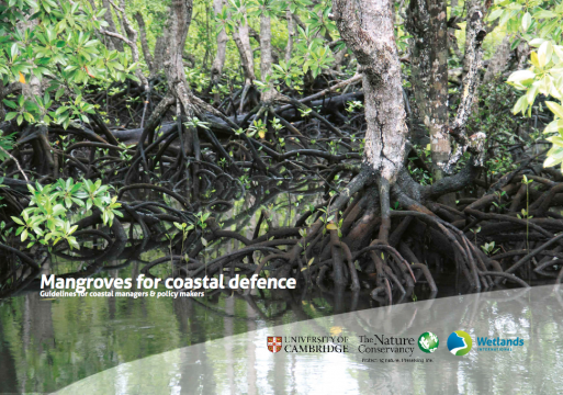Mangroves Provide Measurable Risk Reduction Benefit to Coastal Communities from Storm Waves and Flooding