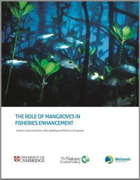 The Role of Mangroves in Fisheries Enhancement