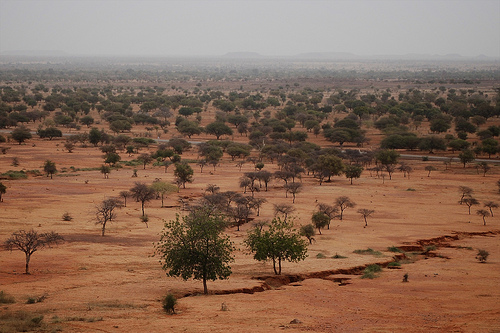 Adaptation to Climate Change and Forests in West Africa (ACFAO)