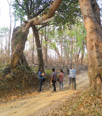 Linking Adaptation and Mitigation through Community Forestry: Case Studies from Asia
