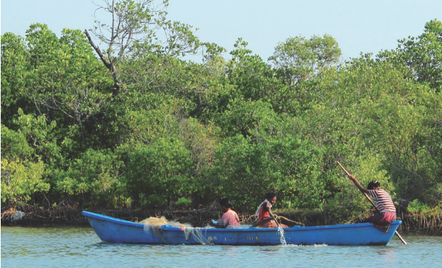 Integrated Mangrove Fishery Farming Systems