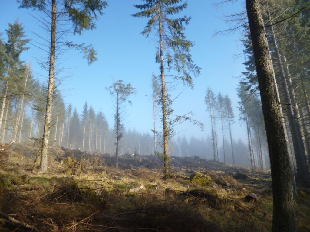 Adapting Scotland's forests for resilience to climate change