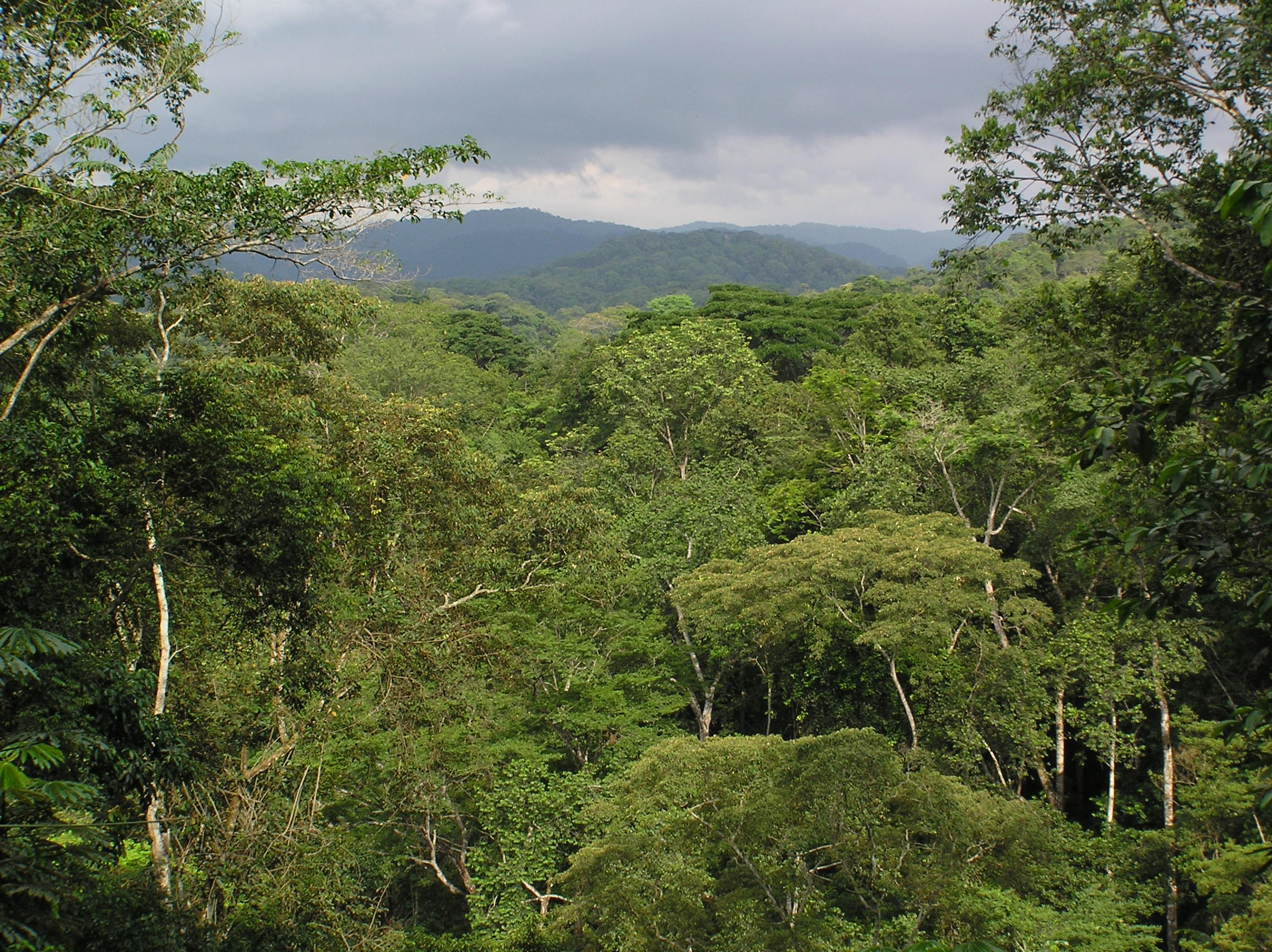 Current vulnerability in the Monte Alén–Monts de Cristal landscape, Equatorial Guinea