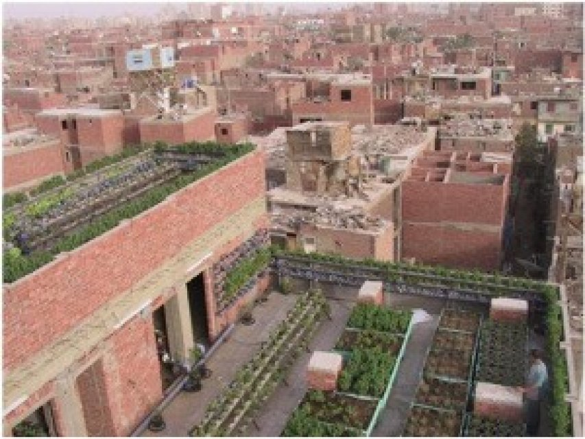 Applying rooftop farming in Cairo, applying different cultivation techniques. Source: Attia (2014)