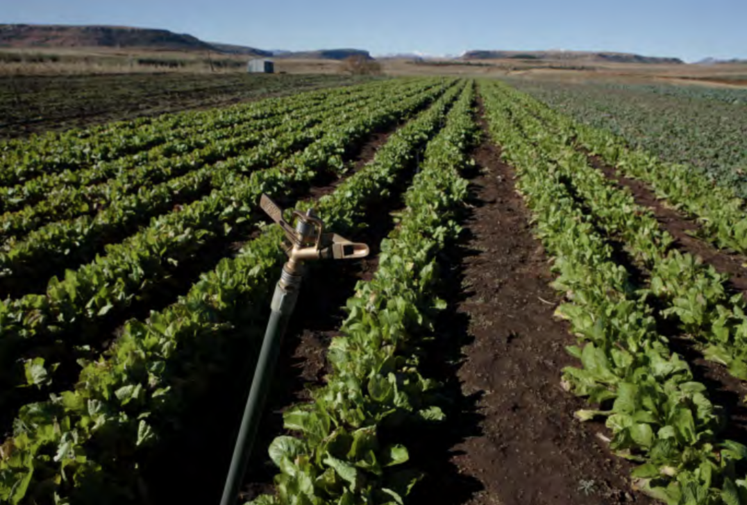 Most of Lesotho's agriculture is rainfed, with low productivity. Another 12,000 ha of irrigated land could boost production by as much as 50%. Photo provided by: John Hogg / World Bank / Flickr.