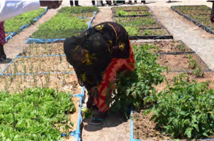 One of the five market gardens developed by the project for the women of the municipality of Yeumbeul Nord. Credit: CRES.