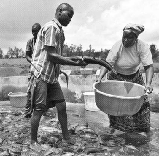 kenyan agricultural adaptation