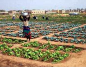 Urban Agricultural plot in Bulawayo, Zimbabwe