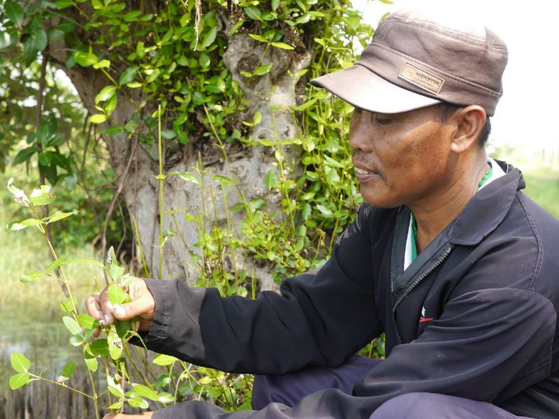 Kodro, a fish farmer in Segoro Tambak Village, East Java, Indonesia, is finding ways to protect his livelihood.