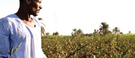 Southern Egypt farmer