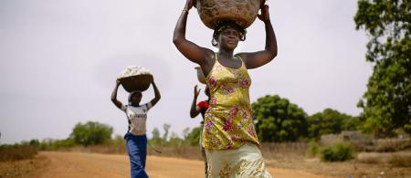 Women carrying cotton.
