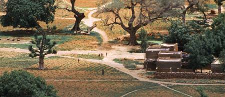 Mali scene by Dieter Telemans