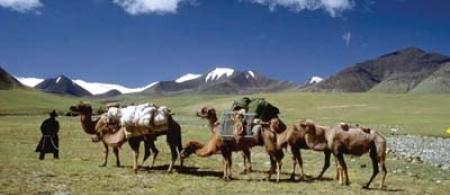4f3245c06a96amongolia-herders - climate adaptation.