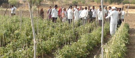 51ed17c347445tomato-plot-in-kumbharwadi - climate adaptation.
