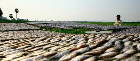 Lower Mekong Basin