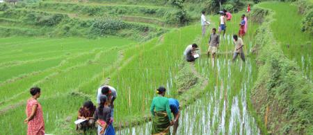 52fb5febbd2baffs-participants-taking-observations-in-rice-field - climate adaptation.
