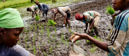 53466cc0503d2climate-change-adaptation-survey-validated-by-farmers-and-stakeholders-undp-in-liberia - climate adaptation.