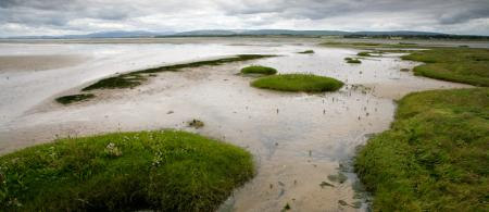 5374c26f6acdenigg-bay-rspb-scotland - climate adaptation.