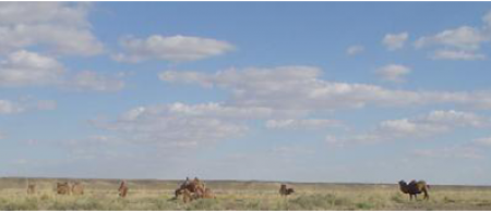 mongolia - climate adaptation.