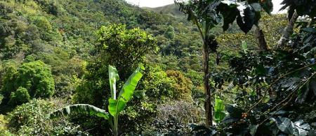 nicaragua - climate adaptation.