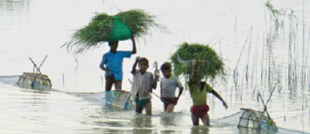 Livelihood Diversification Through Integrated Production Systems