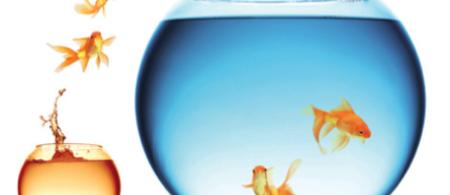 ukcip goldfish - climate adaptation.