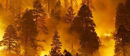 4f56273e2adb3forest-firesjpg - climate adaptation.