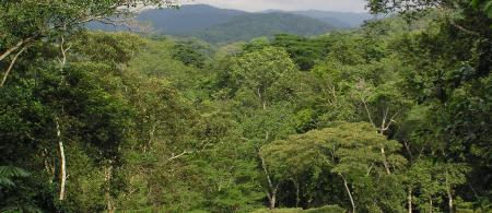 53abe3bf602b8equatorial-guinea-forest-wri - climate adaptation.