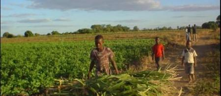 5419a5ce04a4dzimbabwe-photo - climate adaptation.
