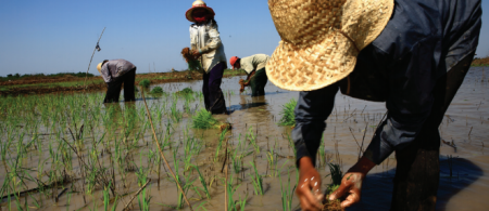asean db rice farmers - climate adaptation.