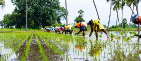 Food systems are one key area for just transition (c) Deepak Kumar