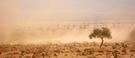 Dusty plains during a severe drought in Kenya: Climate change has increased the frequency and magnitude of extreme weather events that have led to a loss of lives, diminished livelihoods, reduced crop and livestock production, and damaged infrastructure, among other adverse impacts.