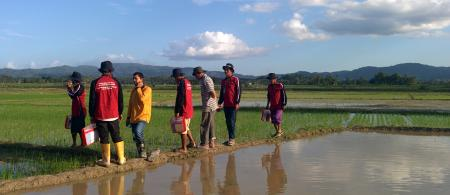 Paddy field observation during Climate Field School in Baruga Village, Kendari. Photo by Mohammad Fadli for USAID APIK