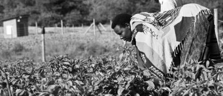ugandan agriculture