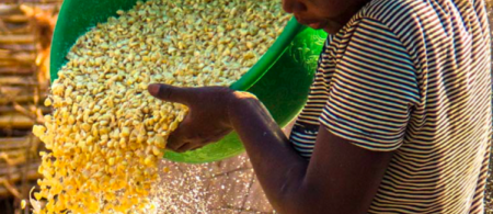 increasing resilience for smallholders in zambia
