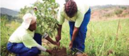 Workers planting trees at the Buffelsdraai Community Reforestation Site