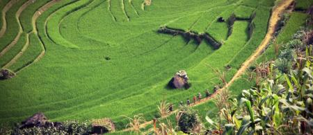 Rice production in Vietnam affects the food security of many – all over the world. Photo: Unsplash / Siamak Djamei