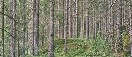 Swedish forest image