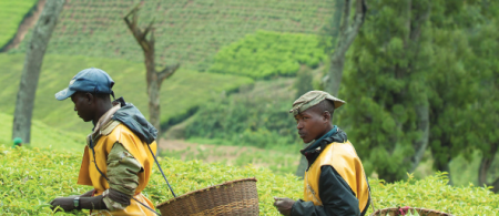 tics rwanda - climate adaptation.