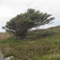 cropped-louisbourg-tree - climate adaptation.