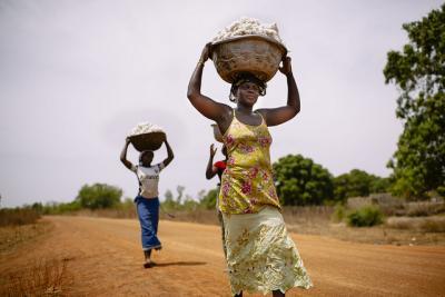 Women carrying cotton.