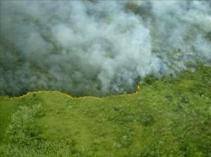 547eff82bc049pando-fire-bolivia-1 - climate adaptation.