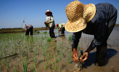 asean db rice farmers 0 - climate adaptation.