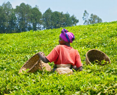 fcfa rwanda 0 - climate adaptation.