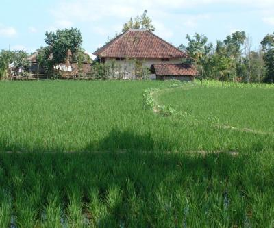 dwelling with rice on Lombok