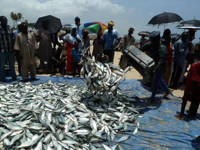 Fresh fish just landed for sale on the beach, Kayar, Senegal. Photo by Anne Delaporte, 2011